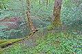 Schleitheim Auenwaldreservat Seldenhalde Bild 7.jpg