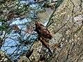 Scott's Run nature preserve (cropped).jpg