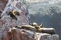 Sea lions chillin'