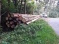 Segeberger Forst 01.jpg
