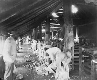 Shearing the Rams - Photograph of a shearing shed outside Melbourne, taken by Charles Nettleton, c. 1880