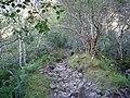 Shieldaig path running through Birchwood - geograph.org.uk - 53879.jpg