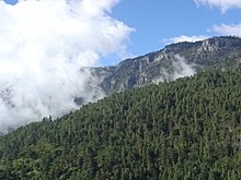 View over a heavily forested mountain slope towards rugged peaks beyond, separated from them by a mass of low cloud.