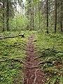 Sippulanniemi nature trail 3.jpg