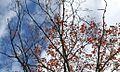 Sky (1905713307).jpg