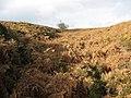Slee House Gill - geograph.org.uk - 279182.jpg