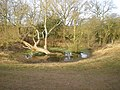 Small pond in fields east of Perton - geograph.org.uk - 1759321.jpg