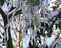 Snow Day in Juybar2.jpg