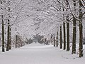 Snow in park Brakkestein, Nijmegen.jpg