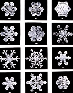 Snowflakes by Wilson Bentley, 1902