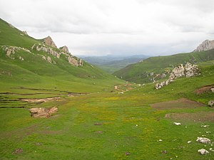 Southeast Tibet shrub and meadows - Flowering summer meadows in Luqu County in the eastern Tibetan Pleateau