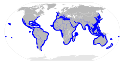 Sphyrnidae distribution map.svg