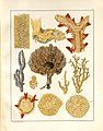 Spongiologische Beiträge (Tafel VII) (7676424850).jpg