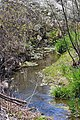 Spring Run looking downstream.jpg