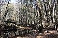 Spring creek 3 (6466597253).jpg