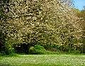 Springtime, Crawfordsburn Country Park - geograph.org.uk - 784957.jpg