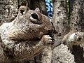 Squirl in Yosemite Valley, California, United States 2011.jpg