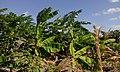 Started farming ready for Tanzania ya Viwanda 01.jpg