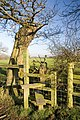 Stile and Fallen Tree - geograph.org.uk - 335731.jpg