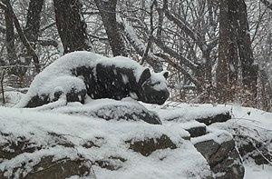 Cedar Hill (Central Park) - 'Still Hunt' on Cat Hill