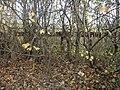 Strange fence - geograph.org.uk - 1046636.jpg