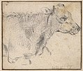 Study of a lying cow MET DP833930.jpg
