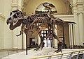 Sue Field Museum.jpg