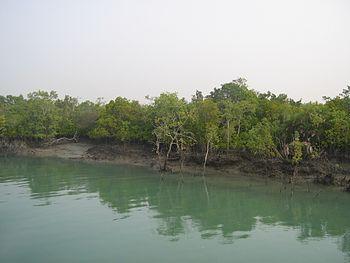 Sundarban , delta , forest 06.jpg