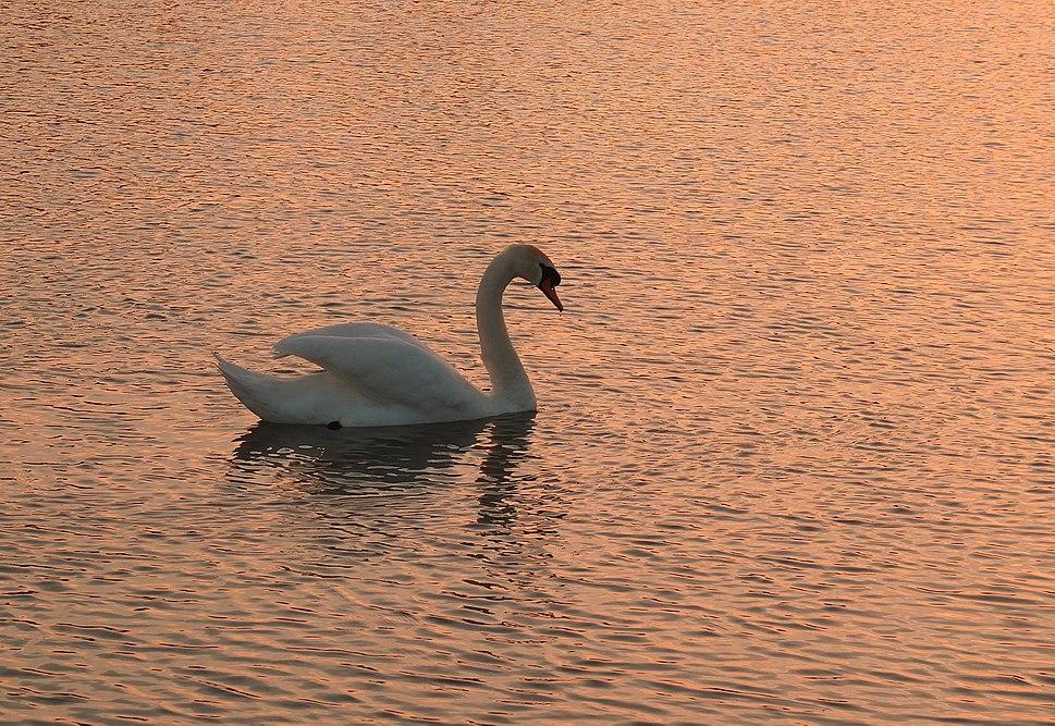 Sunset Beauty (7270106236)