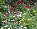 Tabby cat (Melbourne).jpg