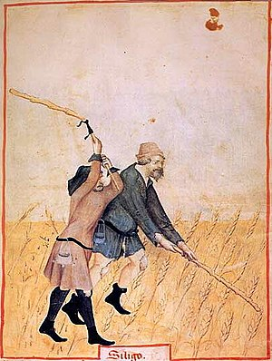 Pocket - Pockets hang from belts as 15th-century peasants thresh siligo wheat in a Tacuinum Sanitatis
