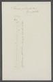 Taenia plicata - - Print - Iconographia Zoologica - Special Collections University of Amsterdam - UBAINV0274 105 20 0003.tif