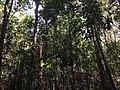 Tangkiling Nature 10.jpg