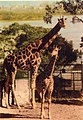 Taronga Park Zoo (26481837524).jpg