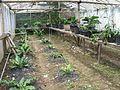 Tawangmangu 2009 Bennylin 074.jpg