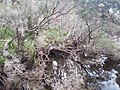 Telegraph Saddle to Sealers Cove Track, Wilsons Promontory National Park 09.jpg