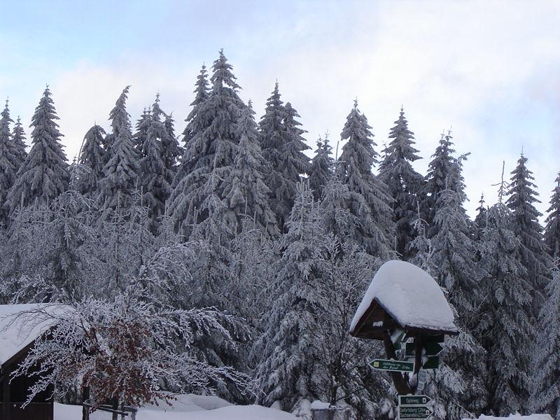 Datei:Thüringer Wald im Winter.jpg