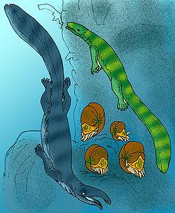 海龍與近親Nectosaurus
