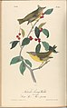 The Birds of America from Drawings Made in the United States MET DP245252.jpg