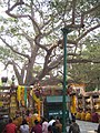The Bodhi Tree - 3178356331.jpg