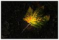 The Leaf (6010829771).jpg