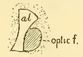 The Osteology of the Reptiles-086 uhygtfyuhgtf 988gh iuhg.png