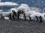The World Factbook - Antarctica - Flickr - The Central Intelligence Agency (2).jpg