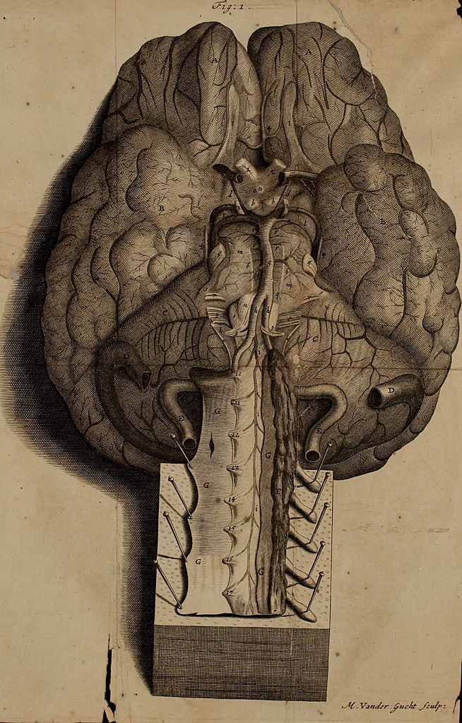 File:The anatomy of the brain - containing its mechanism and ...