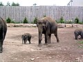The new elephant (160552669).jpg
