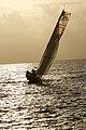 Thomas Ruyant - Charente-Maritime-Bahia.jpg
