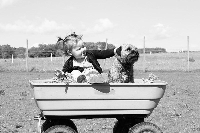 File:Thornbury toddler and dog (Unsplash).jpg