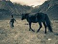 Tibetan Girl leading Horse away.jpg