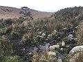 Tomales Point Water Sources- Southwest Section- SW07a - September 1, 2020 (4eec465e-8feb-4ef0-9b8b-3b5af001149f).jpg