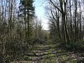 Track in Maltby Wood - geograph.org.uk - 723633.jpg